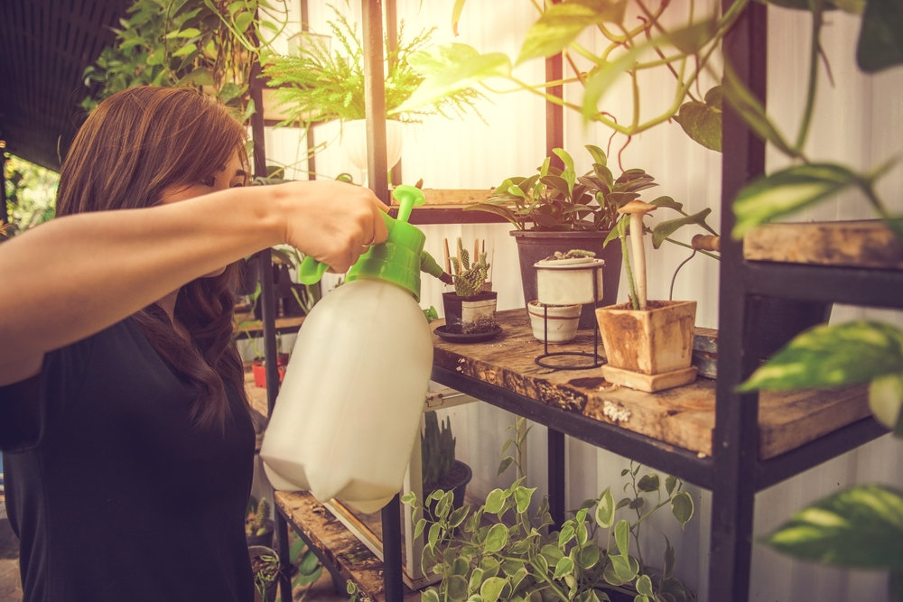 plante intérieur