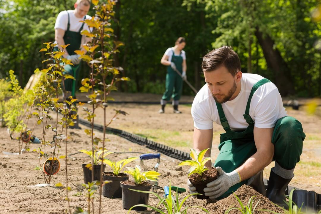 jardiner-entretien-jardin