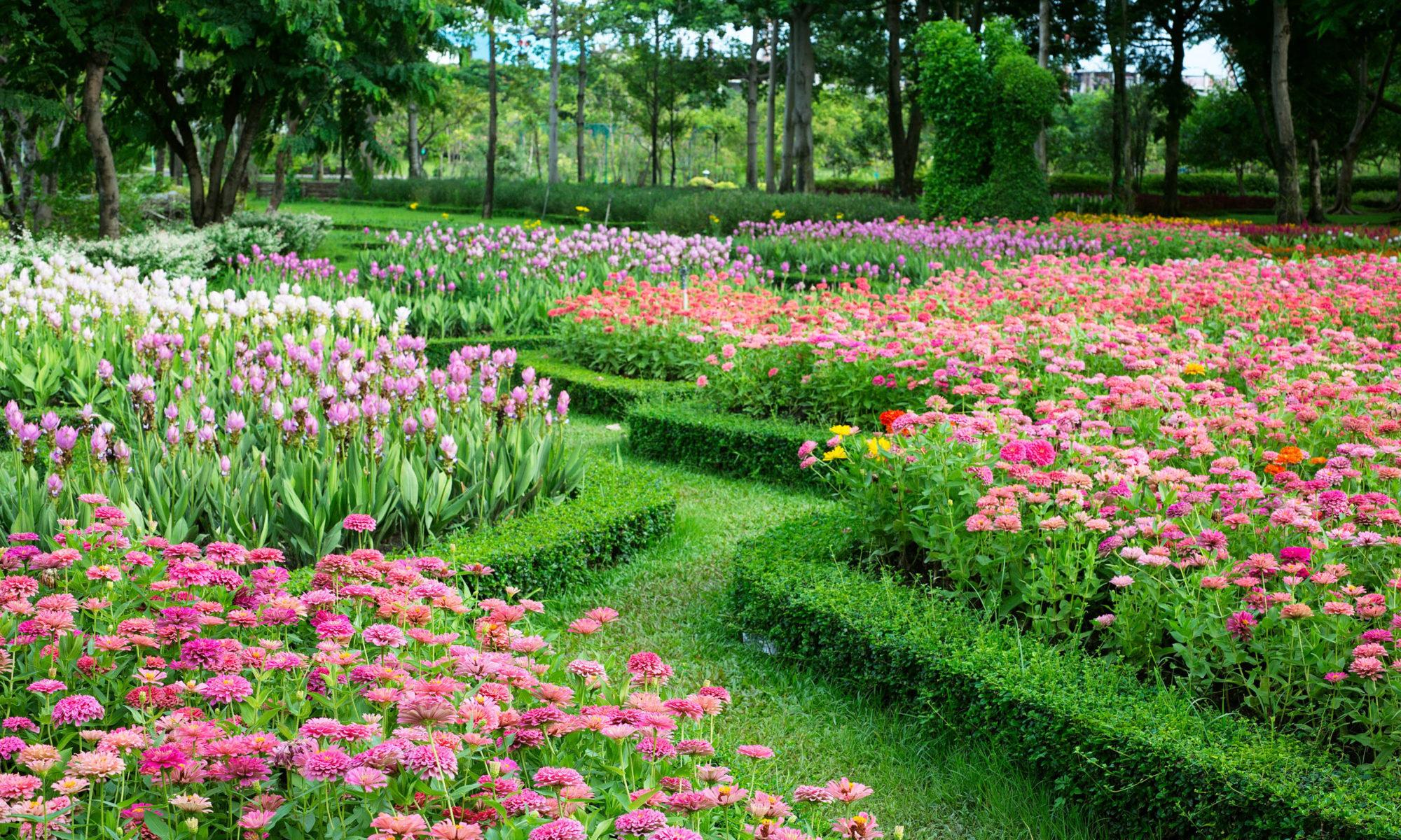 entretien jardin été