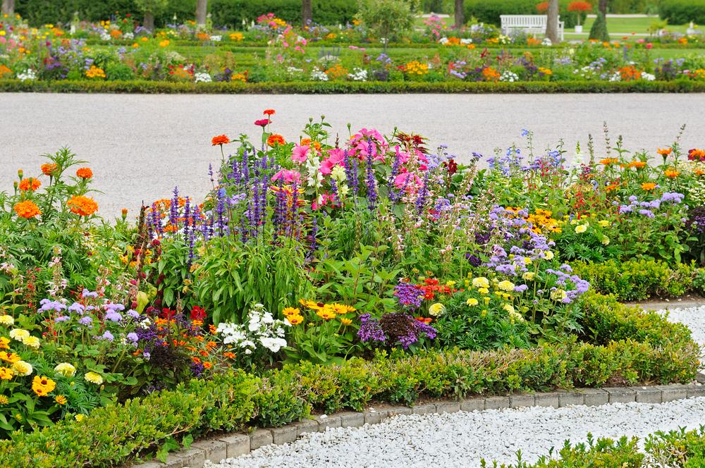 Top 10 plantes nécessitent nécessaire