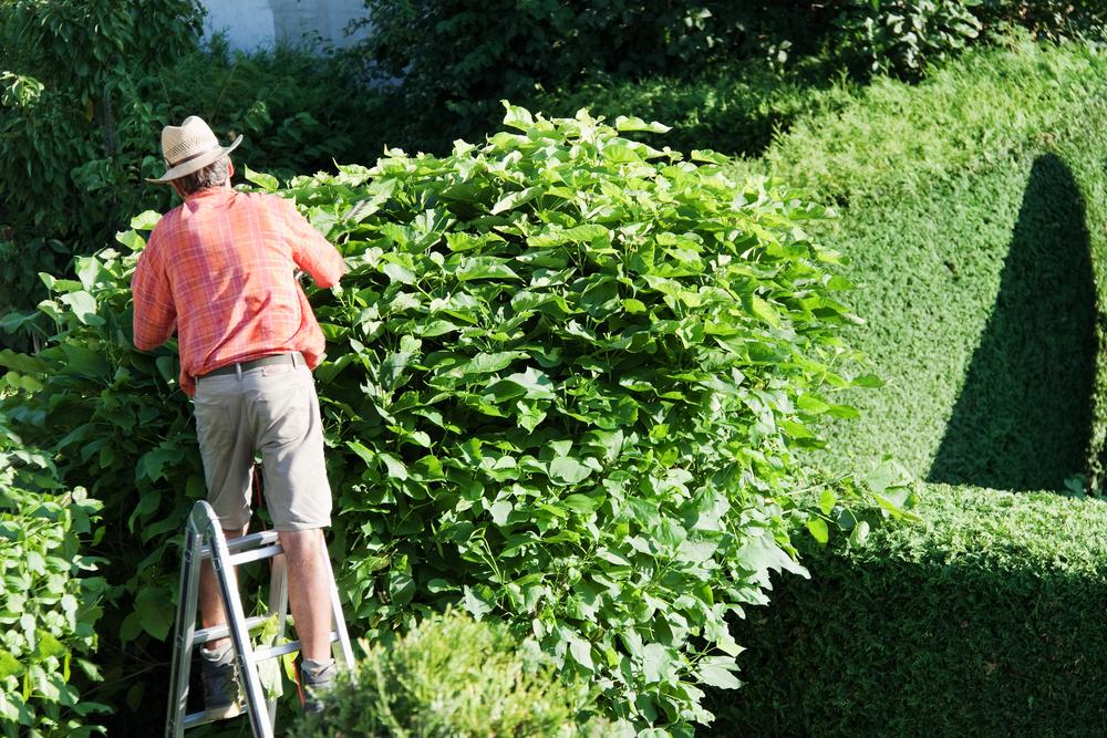 plante-entretien