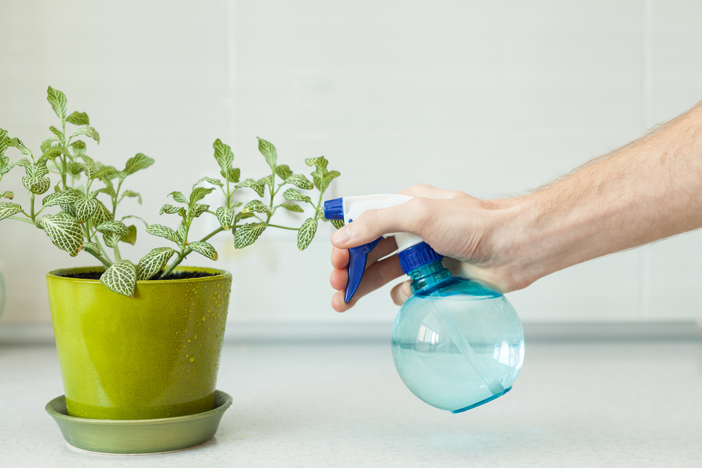 Vaporiser maison jardin d'intérieur