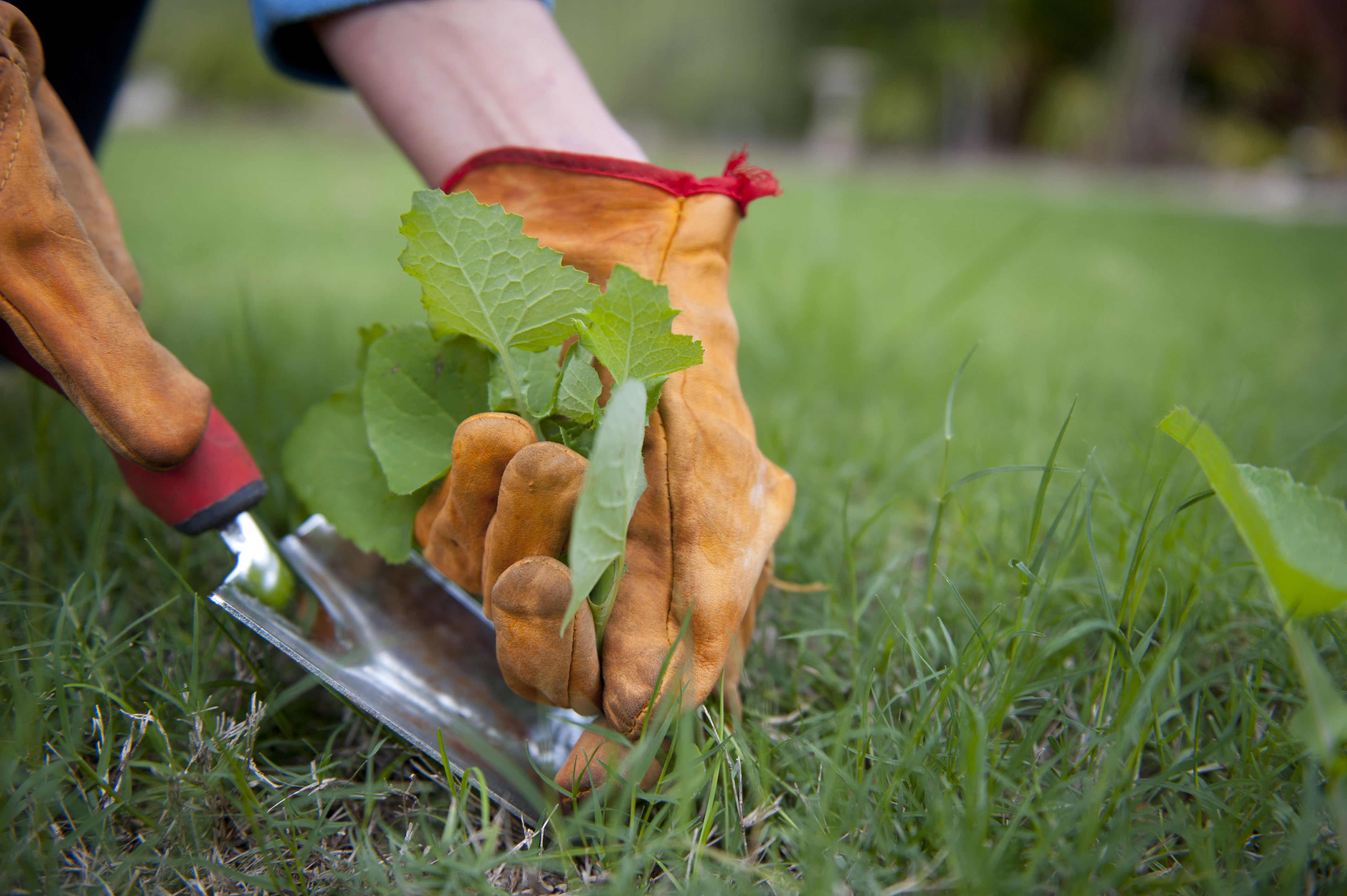 outil-entretien-jardin