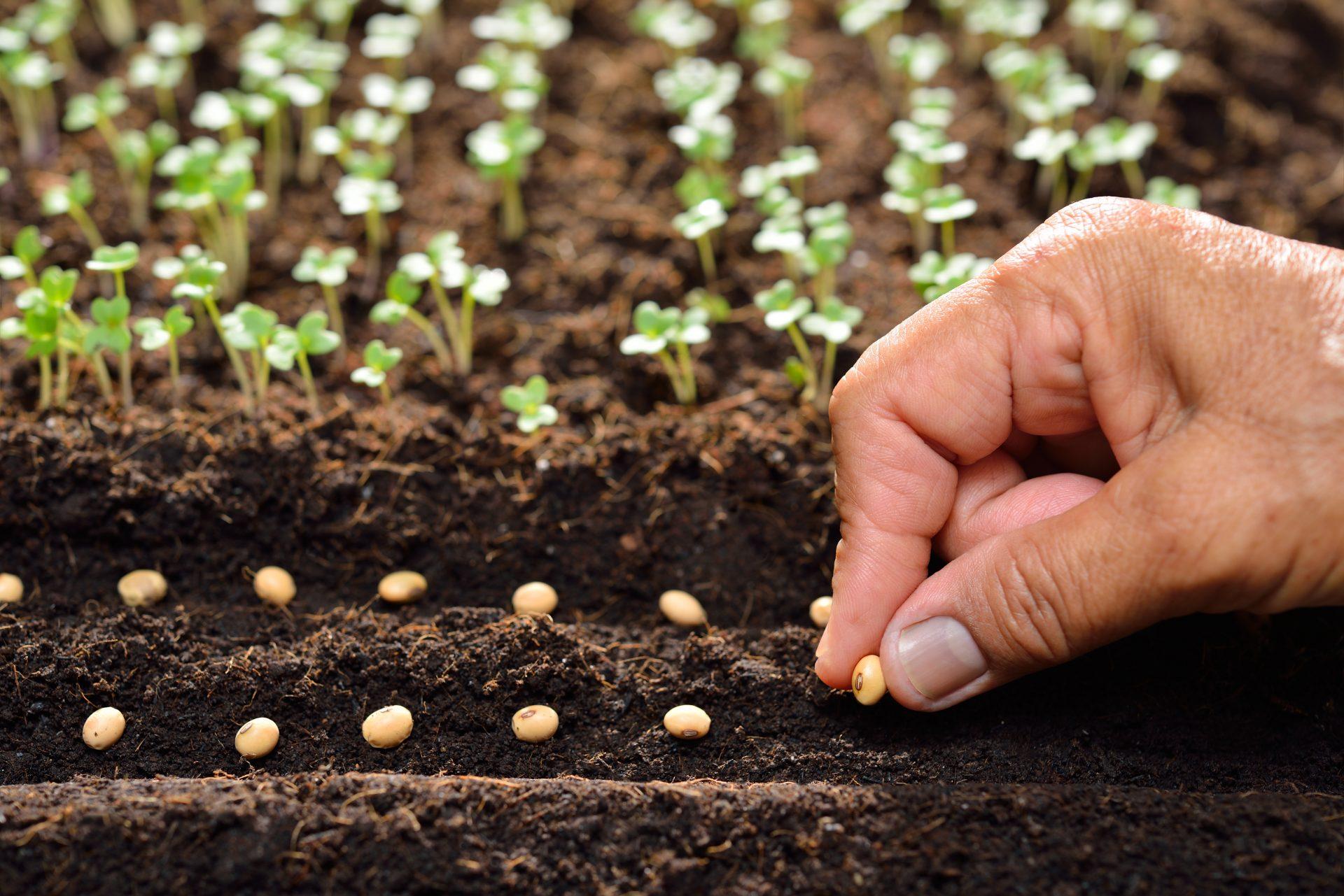 débuter jardinage